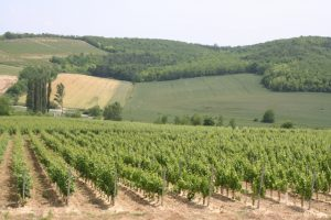 Ízletes borokat kóstolhat meg szőlőbirtokainkon.